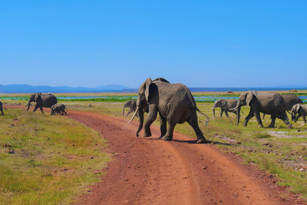 Der Amboseli Nationalpark