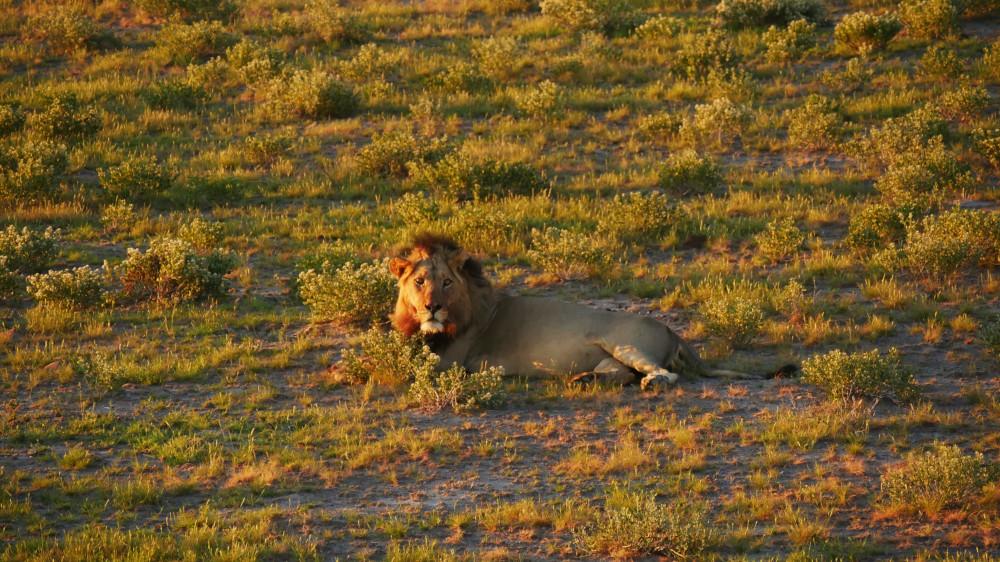 Der Zentral Kalahari Nationalpark