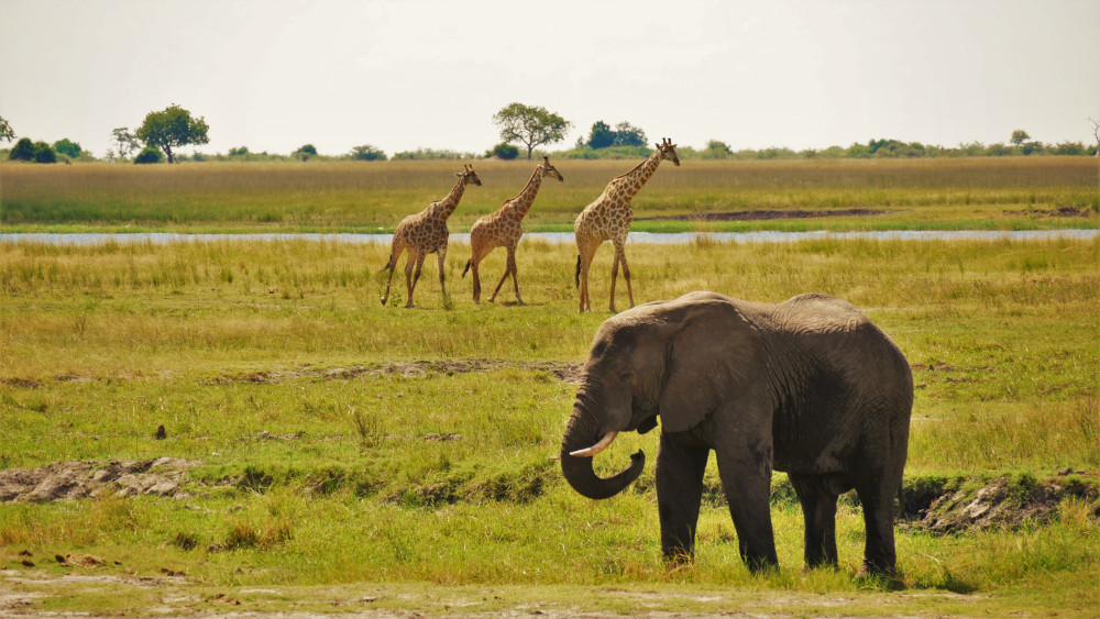 Der Chobe National Park