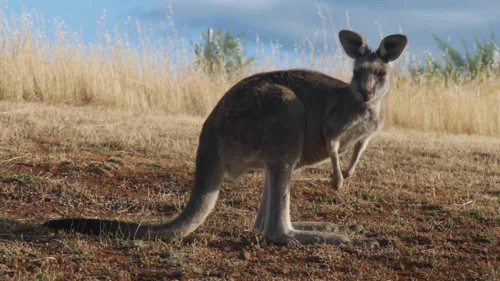 Farmarbeit in Australien